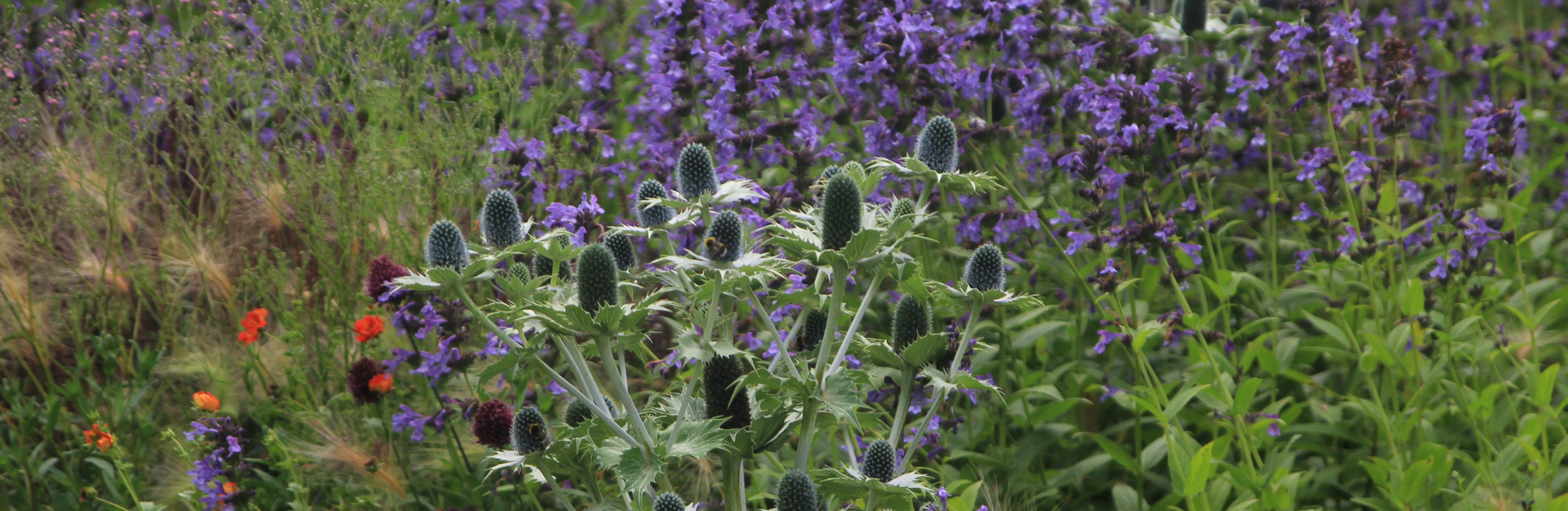 Hooldusvaba aed